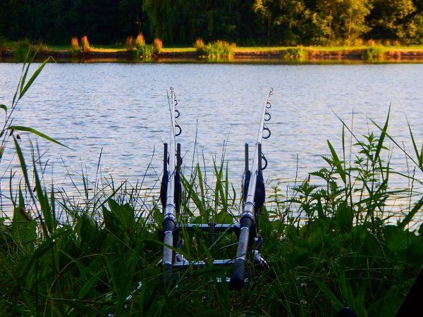 Cosa si intende per canne da pesca con elastico e a quale categoria  appartengono  Sono utilizzate per specifiche tecniche di pesca  00c50173d2e0